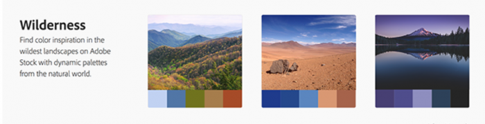 Website Color Palatte